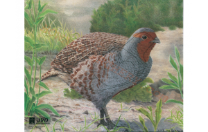 jvd-animal-face-partridge